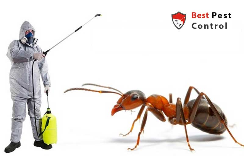 Ant Cotntrol Cleaning Service In Bd Best Pest Control Bd
